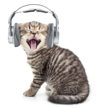 listening to music: Gato del canto divertido o gatito en los auriculares escuchando m�sica Foto de archivo