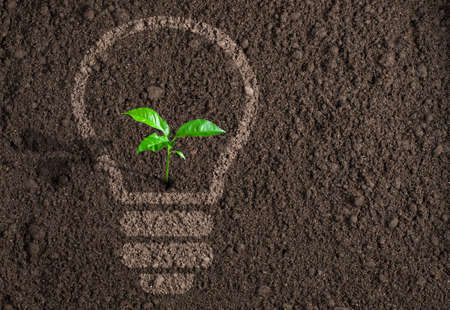 Green plant in light bulb silhouette on soil background