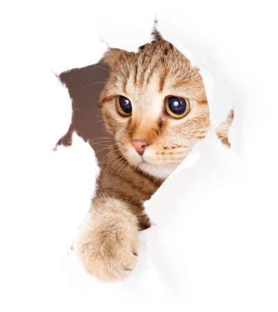 kat die in document kant gescheurd gat geïsoleerd Stockfoto