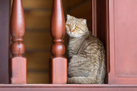 domestic tabby cat in home interior photo
