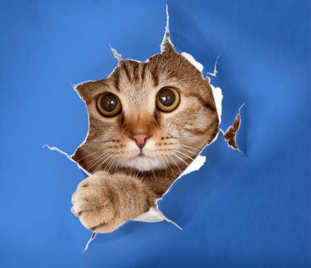 kat in blauwe chromakey document gat