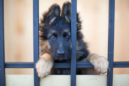 closeup puppy: Unhappy puppy behind bars in shelter