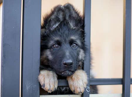 occhi tristi: Molto triste cucciolo in gabbia rifugio Archivio Fotografico