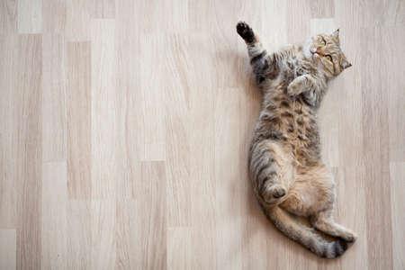 自宅のフローリングの上に横たわる猫