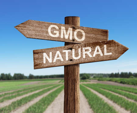 GMO and natural road sign with pea field background