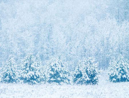 snowfalls: Winter background with snowy trees and snowfall Stock Photo