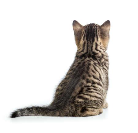 Cat back weergave geïsoleerd zitten Stockfoto