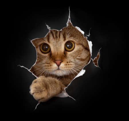 prankster: cat in black paper background