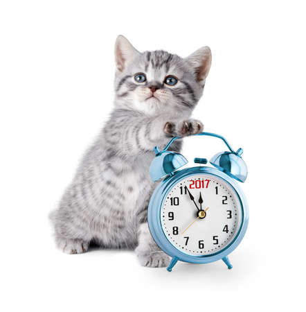 kitten with alarm clock displaying five minutes before 2017 year