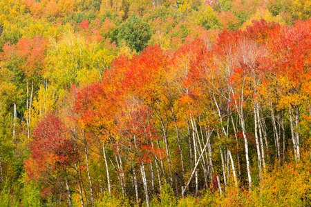 fall landscape: autumn or fall forest landscape Stock Photo