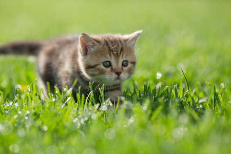Little kitten steal in green grass