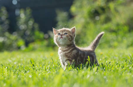 Little kitten looking up in green grass Stock Photo