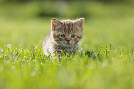 Young funny kitten steal in the green grass