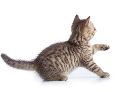 Frightened kitten cat rear or back view