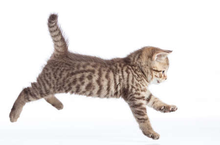 Active running cat side view isolated