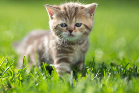 Little cat standing in green grass outdoor