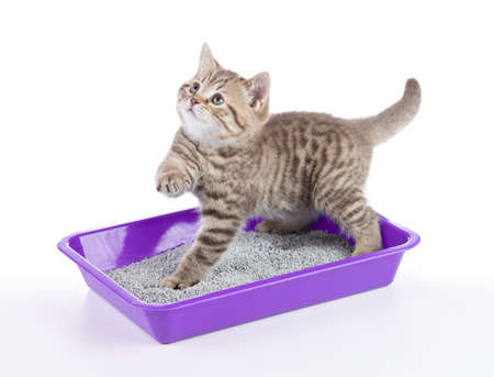 cat in toilet tray box with litter isolated on white Imagens