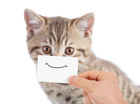 funny cat portrait with smiling face