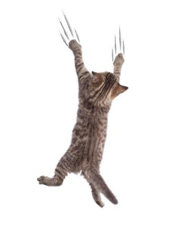 Funny cat clamber isolated on white Фото со стока - 84181938