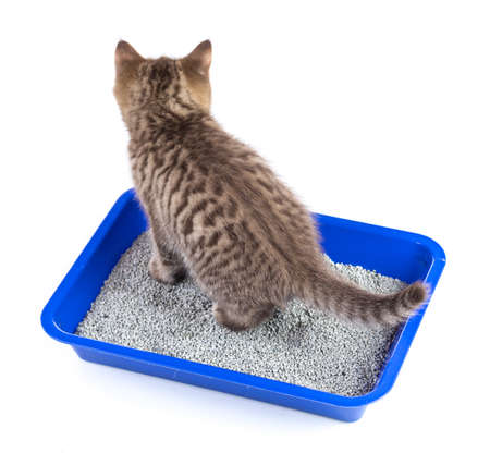 absorbent: cat in toilet tray box with litter rear view isolated