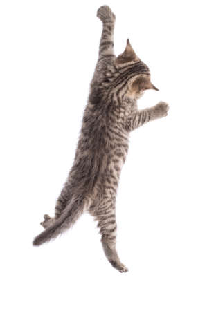 Funny cat hanging on white background Stock Photo