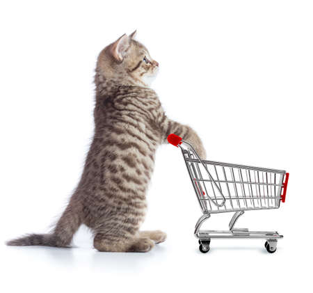 Funny cat standing with shopping cart side view Stock fotó - 84660438