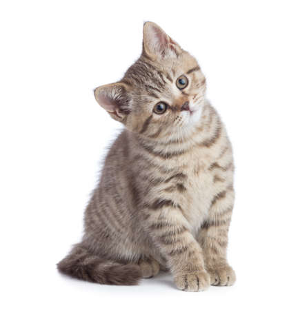 Sitting young cat full length looking with great attention isolated Stock Photo