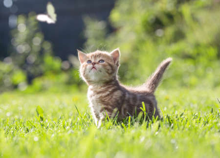 Funny cat in green grass looking at butterfly