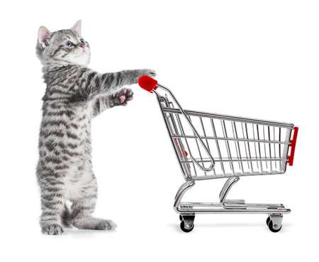 Grappige grijze kat met zijaanzicht van de winkelwagentje geïsoleerd op wit