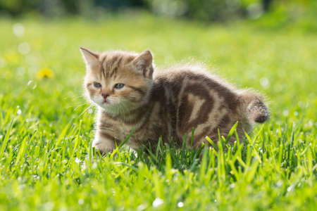 Young baby cat in green grass Stock Photo