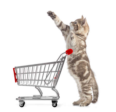 Funny cat standing with shopping cart side view isolated Stockfoto