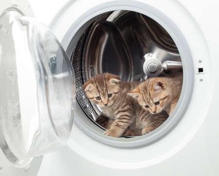 面白いイギリス子ネコ洗濯中 写真素材 - 85129143