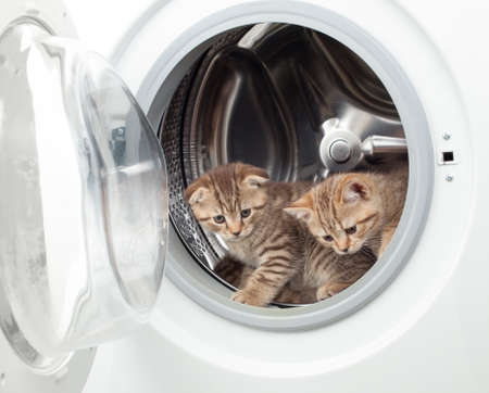 Funny british kittens inside laundry washer