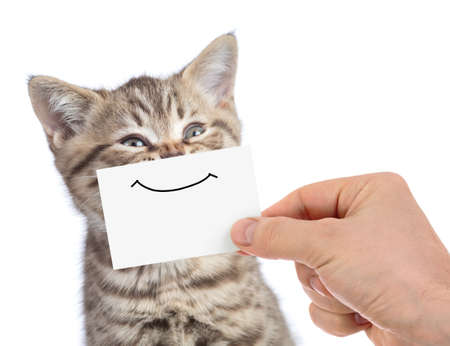 funny happy youmg cat portrait with smile on cardboard isolated