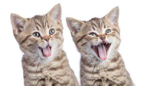 分離された 2 つ面白い幸せな若い猫の肖像画