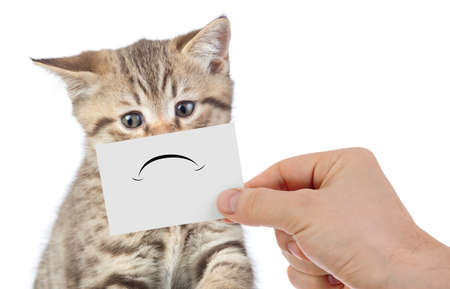 funny unhappy young cat portrait isolated on white