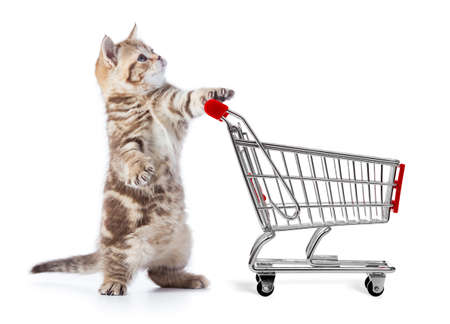 funny cat with shopping cart side view stock photo picture and