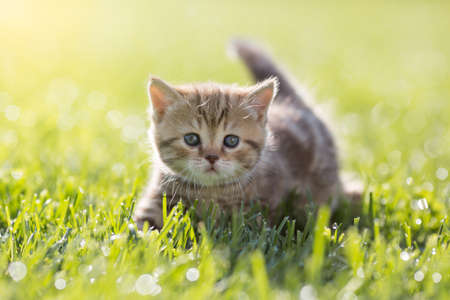 Baby cat in green grass