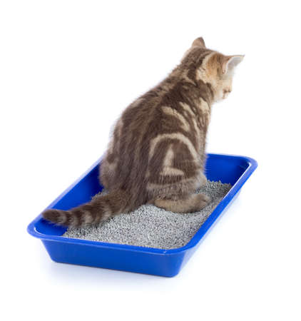 cat urinating in toilet tray box with litter rear view isolated Stock Photo
