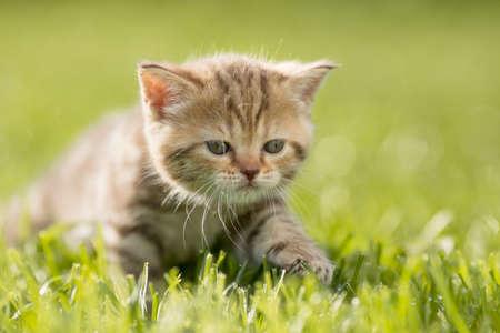 babies: Baby kitten cat in green grass