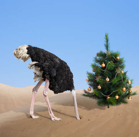 scared ostrich burying head in sand under xmas tree