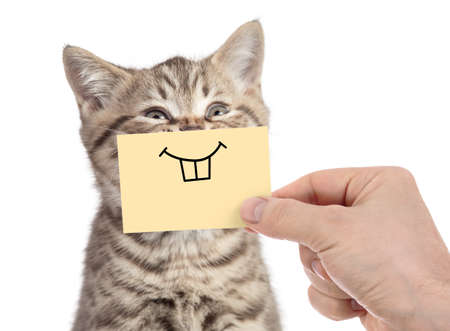 happy cat with funny smile on cardboard isolated on white