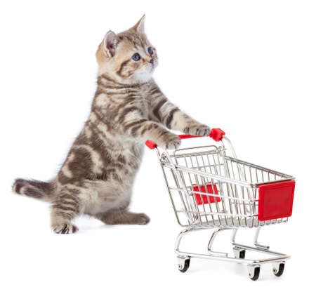 Funny cat standing with shopping cart Standard-Bild