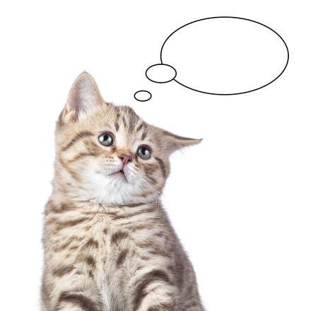 꿈꾸는 고양이 초상화 절연 스톡 콘텐츠
