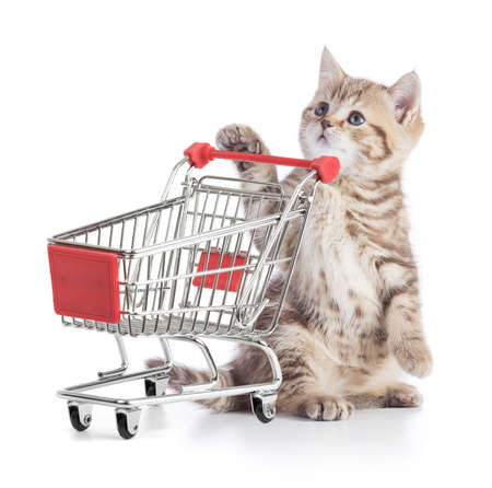 cat with shopping cart isolated on white