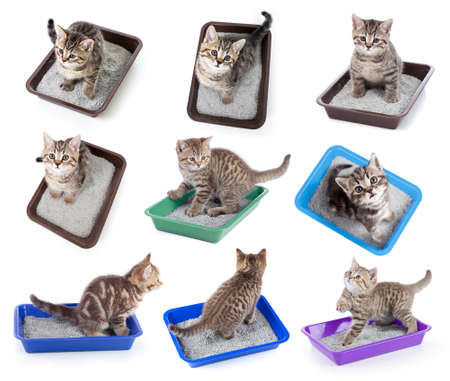 Cats top view sitting in litter box isolated on white collection