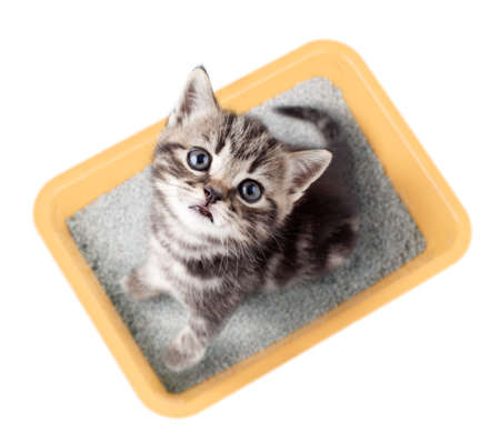Cat top view sitting in yellow litter box isolated Archivio Fotografico