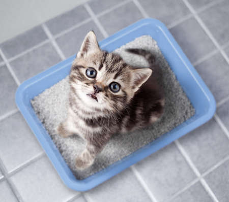 Cute cat top view sitting in litter box on bathroom floor