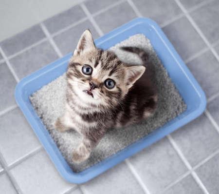 Cute cat top view sitting in litter box on bathroom floor