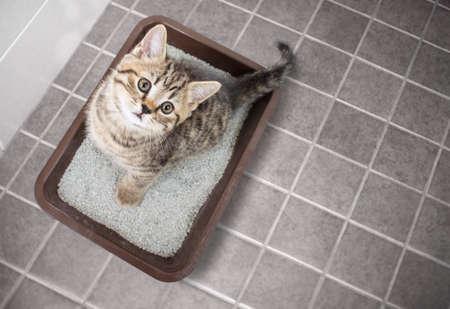 Widok z góry ładny kot siedzi w kuwecie z piaskiem na podłodze w łazience